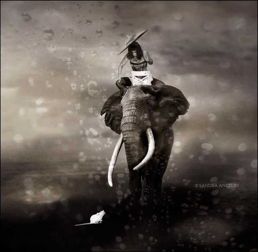 elephant-souris-pluie
